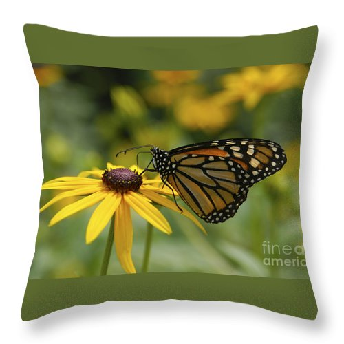 Monarch Butterfly Throw Pillow featuring the photograph Monarch Butterfly by Anthony Sacco