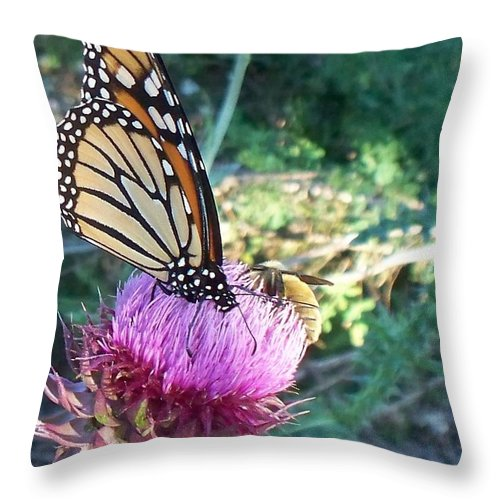 Butterfly Throw Pillow featuring the photograph Monarch Butterfly by Eric Schiabor