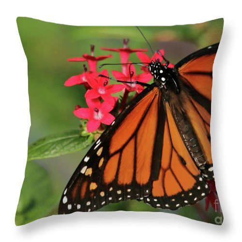 Monarch Throw Pillow featuring the photograph Monarch Butterfly by Sabrina L Ryan