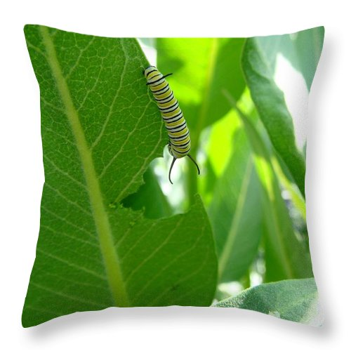 Monarch Caterpillar Throw Pillow featuring the photograph Monarch Caterpillar by Cynthia Wallentine