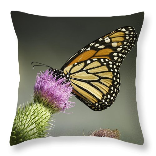 Monarch Butterfly Throw Pillow featuring the photograph Monarch Of The Wild by Thomas Young