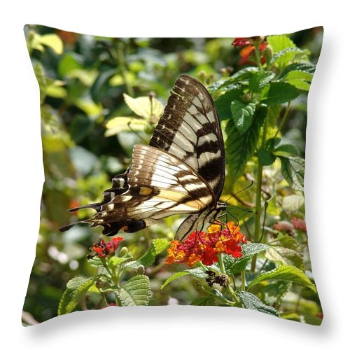 Monarch Throw Pillow featuring the photograph Monarch Pause by Ian Mcadie