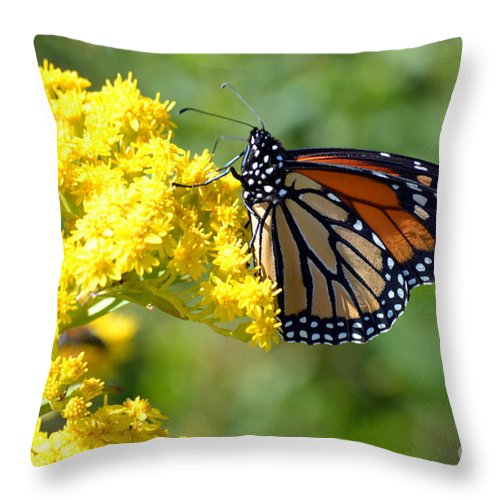 Monarch Throw Pillow featuring the photograph Monarch Resting by Merrilyn Parry