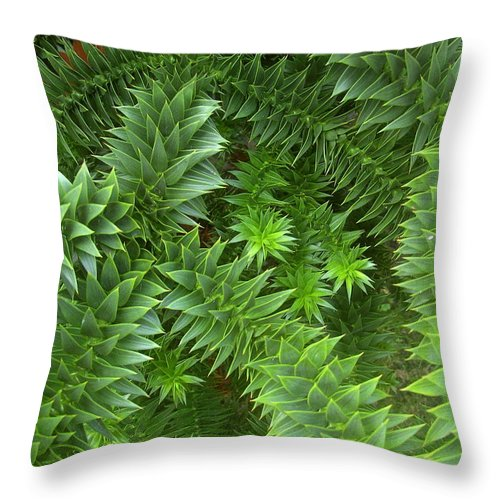 Monkey Throw Pillow featuring the photograph Monkey Puzzle by Steve Kearns