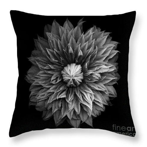 Black Throw Pillow featuring the photograph Monochrome Clematis Blossom by Oscar Gutierrez