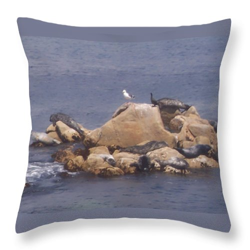 Seal Throw Pillow featuring the photograph Monterey Sun Bath by Pharris Art