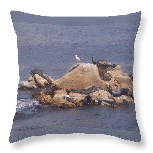 Seal Throw Pillow featuring the photograph Monterey Sun Bath by Pharris Art