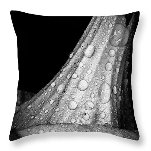 Earthy Throw Pillow featuring the photograph Moonflower And Rainwater by Chris Berry