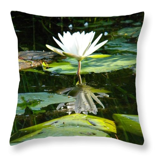 Pond Throw Pillow featuring the photograph Morning Calm by Matthew Seufer