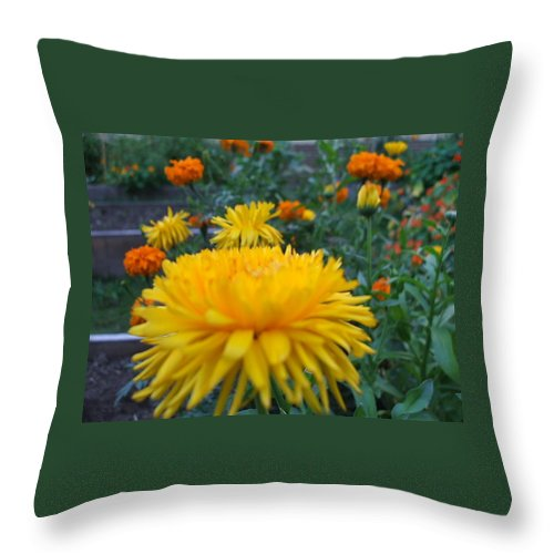 Floral Throw Pillow featuring the photograph Morning by Jo Dawkins
