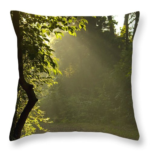 Sunlight Throw Pillow featuring the photograph Morning Light by Melinda Fawver