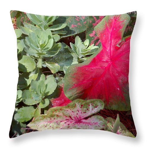 Caladium Throw Pillow featuring the photograph Morning Rain by Suzanne Gaff
