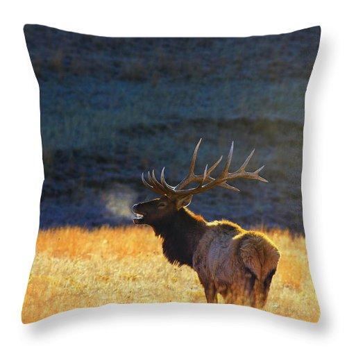 Park Throw Pillow featuring the photograph Morning Breath by Kadek Susanto