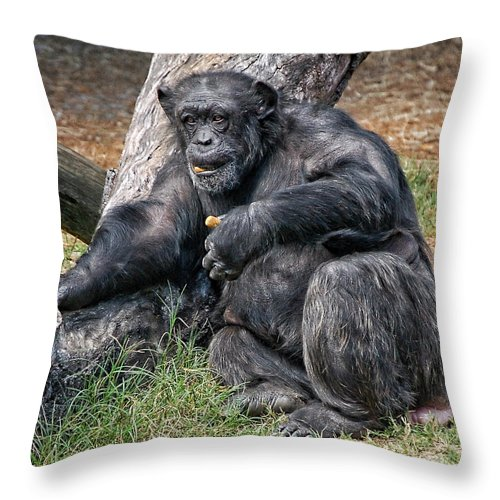 Chimpanzee Throw Pillow featuring the photograph Morning Snack by Donna Proctor