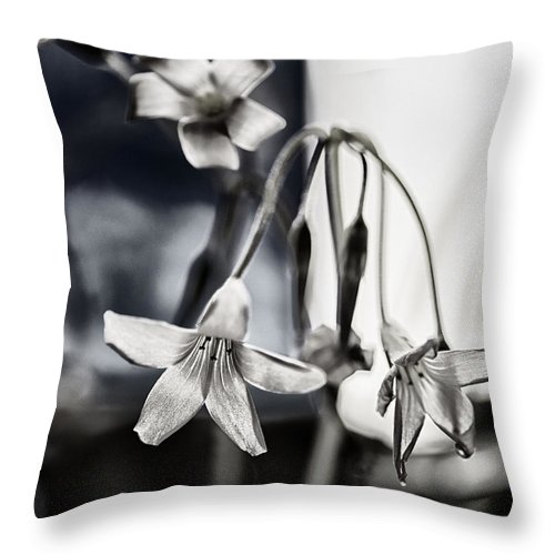 Flower Throw Pillow featuring the photograph Morning Sun by Susan Capuano