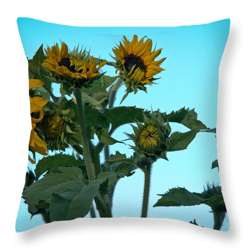 Sunflower Throw Pillow featuring the photograph Morning Sunflowers by Cheryl Baxter