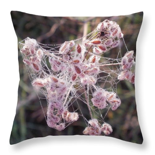 Spider Throw Pillow featuring the photograph Morning With A Spider by Desiree Holloway