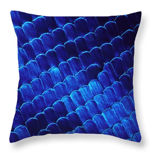 Morpho Throw Pillow featuring the photograph Morpho Butterfly Scales by ER Degginger