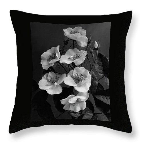 Flowers Throw Pillow featuring the photograph Moschata Alba by J. Horace McFarland