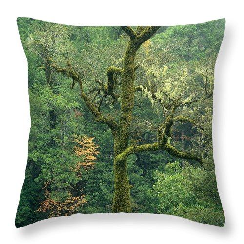 North America Throw Pillow featuring the photograph Moss Covered Tree Central California by Dave Welling