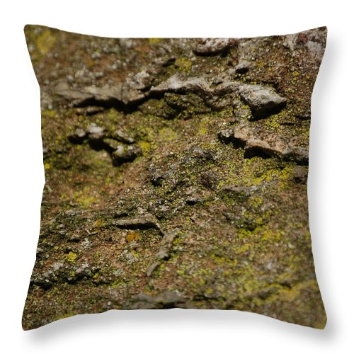 Linda Brody Throw Pillow featuring the photograph Moss On Rock by Linda Brody