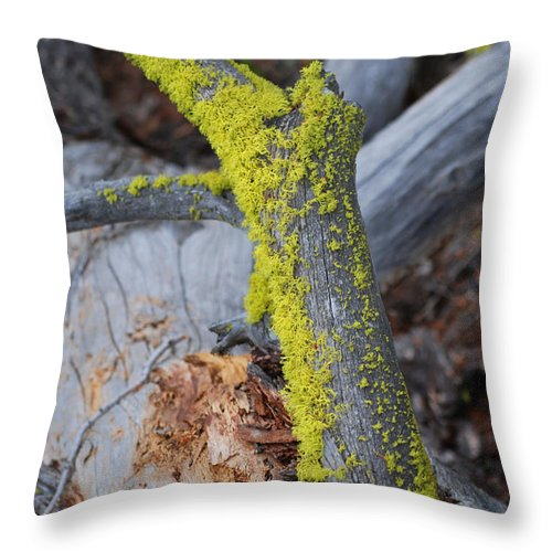 Tree Throw Pillow featuring the photograph Mossy by Breanna Calkins
