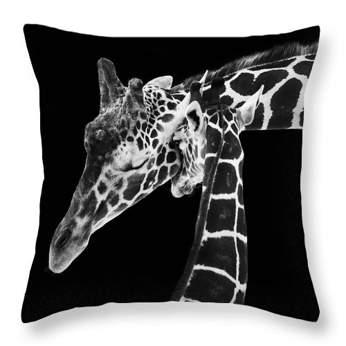 3scape Photos Throw Pillow featuring the photograph Mother And Baby Giraffe by Adam Romanowicz