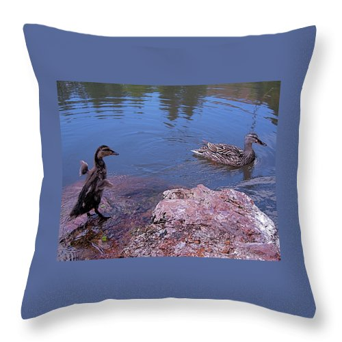 Mallard Throw Pillow featuring the photograph Mother And Child by Rona Black