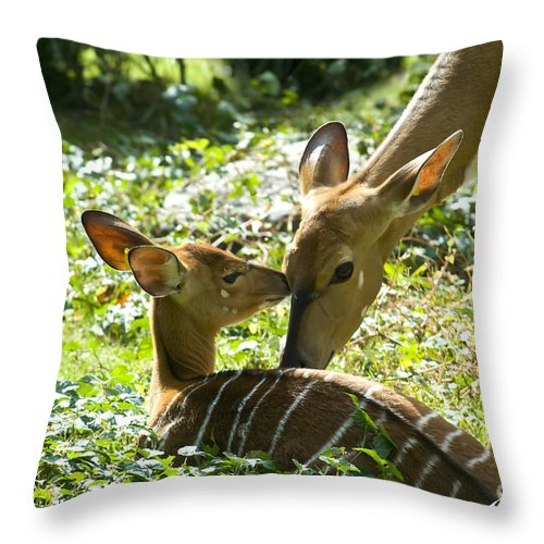 Deer Throw Pillow featuring the photograph Motherly Love by Anthony Sacco
