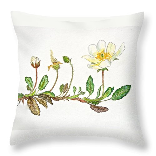 Mountain Avens Greeting Card Throw Pillow featuring the painting Mountain Avens by Virginia Ann Hemingson