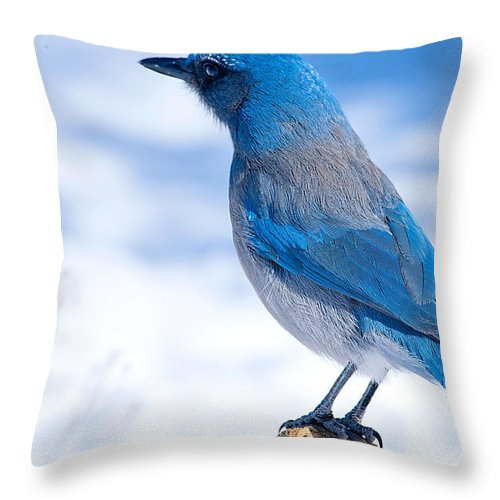Blue Bird Throw Pillow featuring the photograph Mountain Blue Bird by Randy Stephens