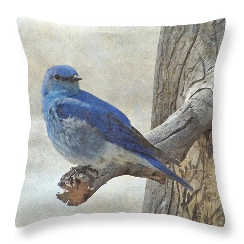 Bluebird Throw Pillow featuring the photograph Mountain Bluebird by Angie Vogel