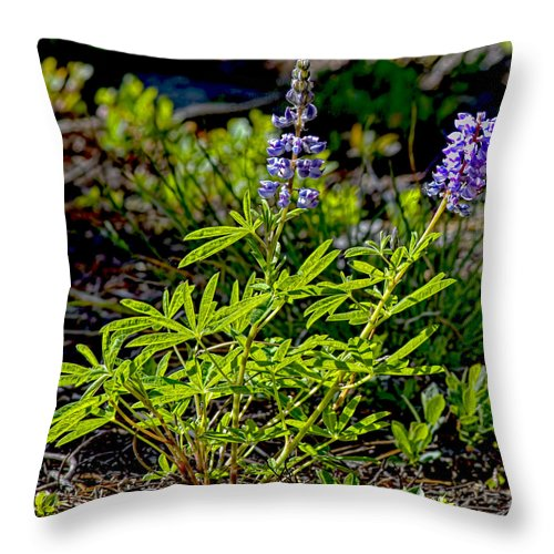 Mountain Lupine Throw Pillow featuring the photograph Mountain Lupine by Gary Holmes