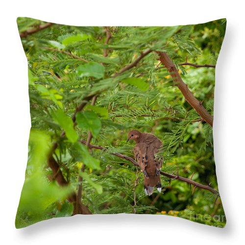Mourning Throw Pillow featuring the photograph Mourning Dove by Luis Alvarenga