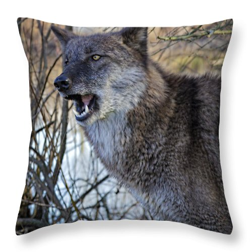 Animal Throw Pillow featuring the photograph Move Back by Jack R Perry