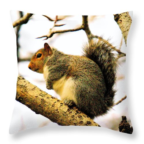 Squirrels Throw Pillow featuring the photograph Mr Fat And Sassy by Jeff Swan