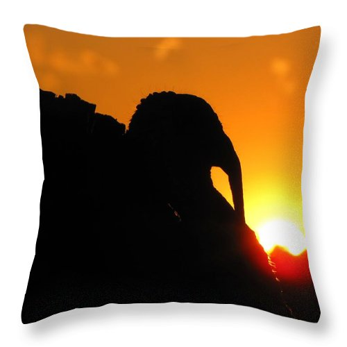 Nature Throw Pillow featuring the photograph Mr Gobbles At Sunset by Matt Taylor