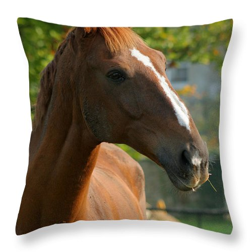 Horse Throw Pillow featuring the photograph Mr Handsome by Angel Ciesniarska