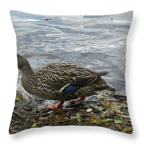 Mallard Throw Pillow featuring the photograph Mrs Mallard by Nicki Bennett