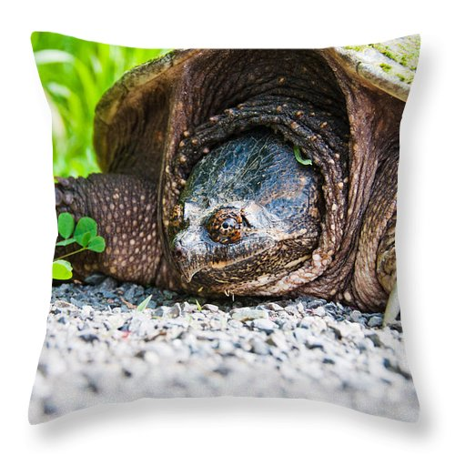 Snapping Turtle Throw Pillow featuring the photograph Mrs. Snapper by Cheryl Baxter