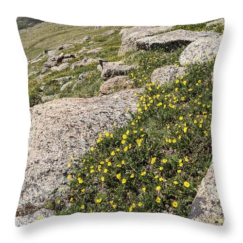Evans Throw Pillow featuring the photograph Mt. Evans Wildflowers by Aaron Spong