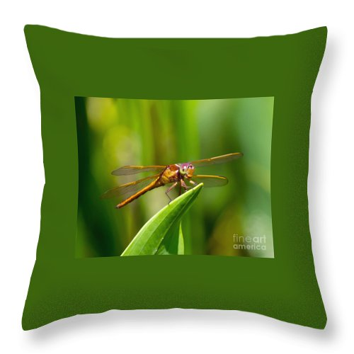 Multicolored Throw Pillow featuring the photograph Multicolored Dragonfly by Stephen Whalen