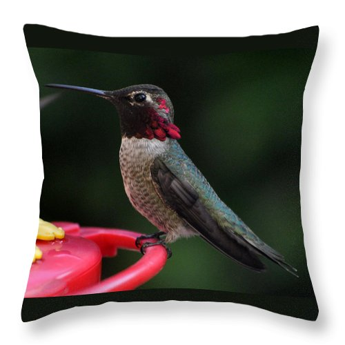 Multicolored Throw Pillow featuring the photograph Multicolored Male Anna by Jay Milo
