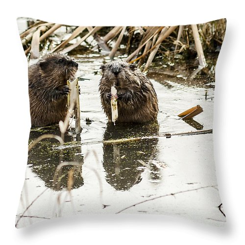 Winter Scene Throw Pillow featuring the photograph Muskrat Date by Edward Peterson