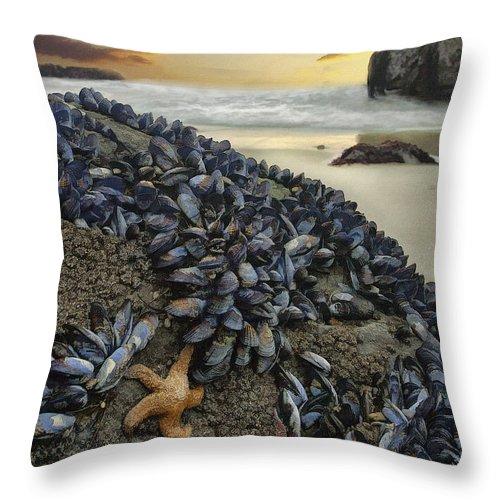 Coast Throw Pillow featuring the digital art Mussel Beach by Sharon Foster