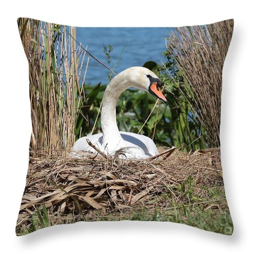 Swan Throw Pillow featuring the photograph Mute Swan Nest by Carol Groenen