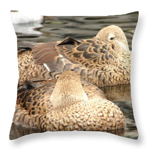 Bird Throw Pillow featuring the photograph My Beak Is Cold by Lew Davis