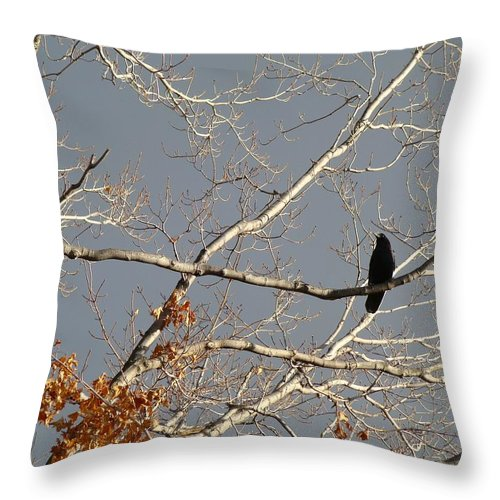 Crow On Branch Throw Pillow featuring the photograph My Branch by Gothicrow Images