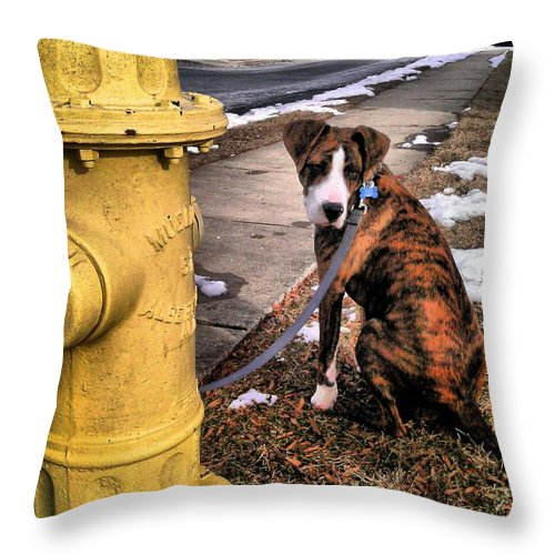 Dogs Throw Pillow featuring the photograph My Friend Plug by Robert McCubbin
