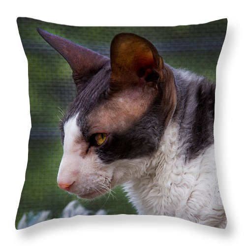 Peso Throw Pillow featuring the photograph My Name Is Peso by Al Bourassa